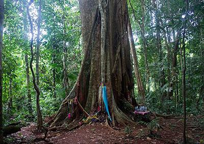 Centennial Forest, Koh Kood