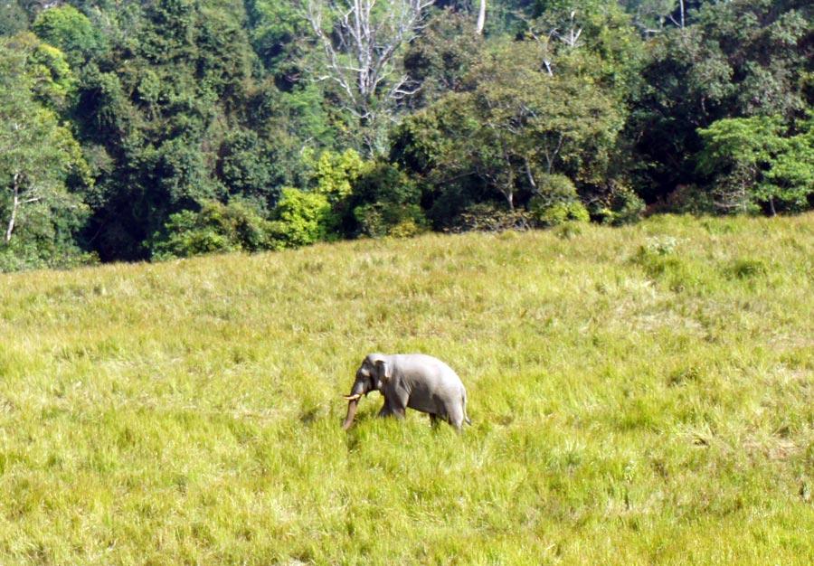 Elephant-khao-Yai