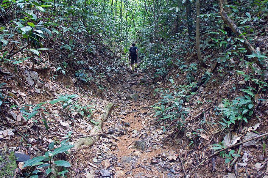 Trekking in Khao Sok Thailand