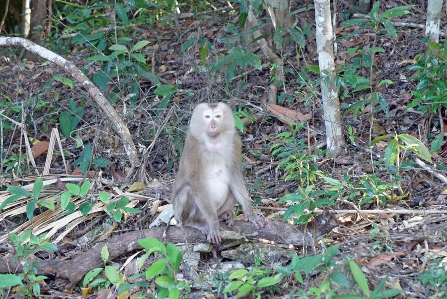Monkey Khao Yai