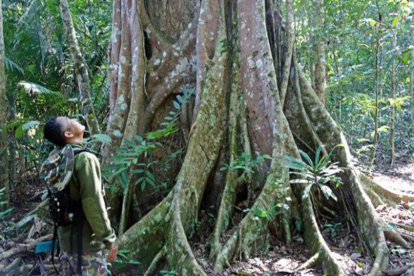 árboles-gigantes-en-Khao-Yai