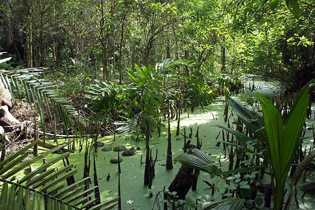 green bang krachao