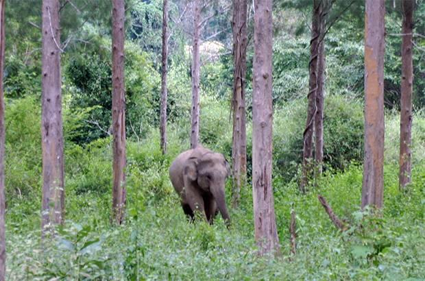 close to a wild elephant