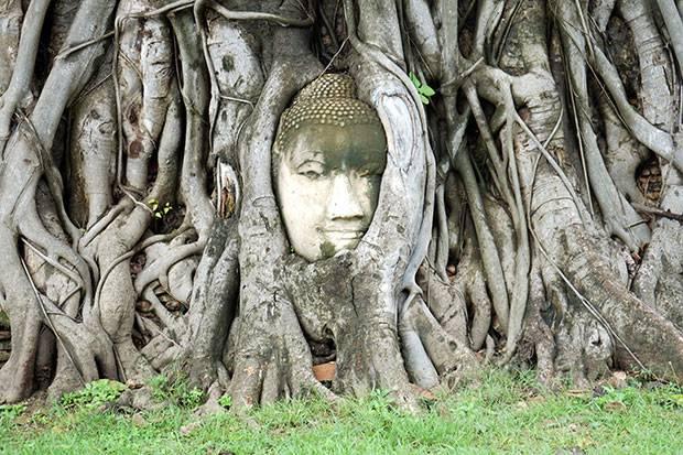 famous ayutthaya buddha head