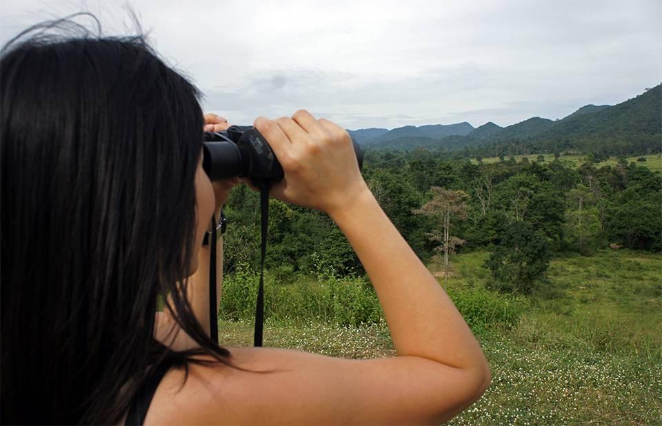 Kui Buri National Park: watching wild elephants in Thailand
