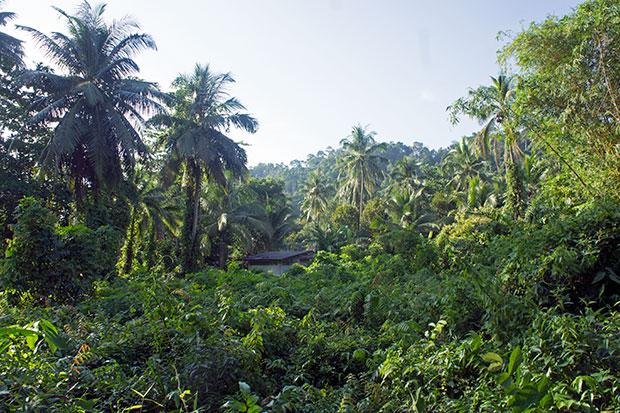 green koh phayam
