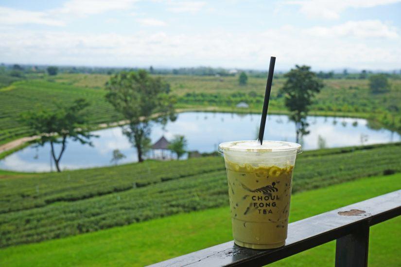 golden triangle tea plantation