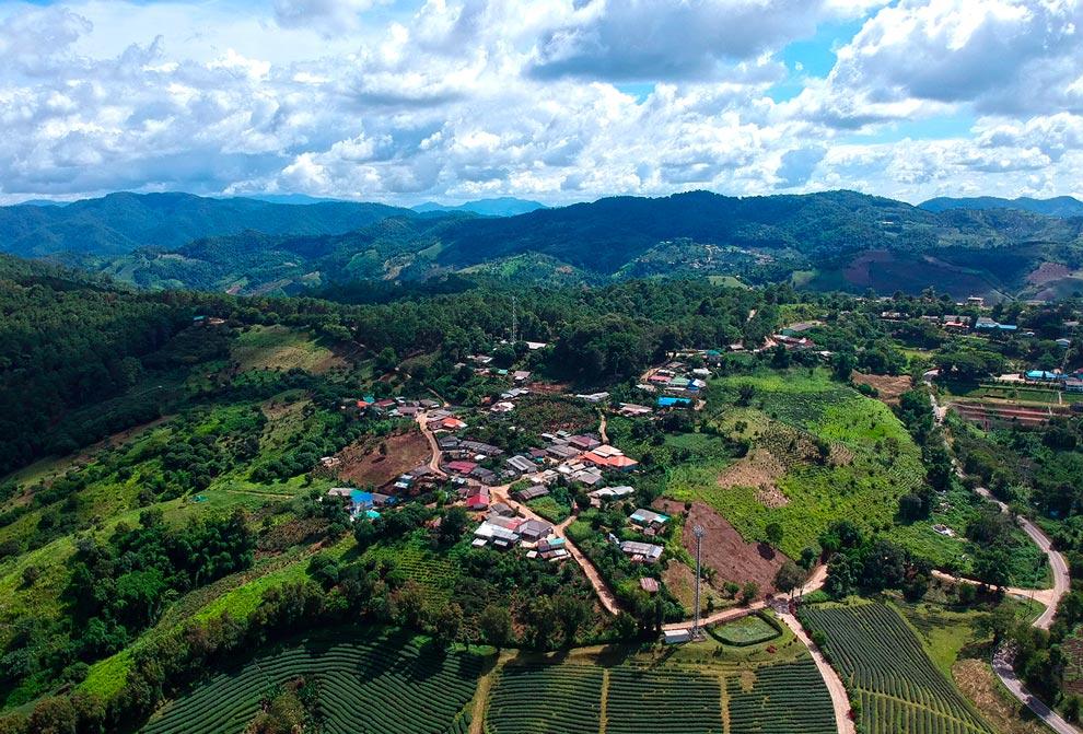 Doi Mae Salong Landscape