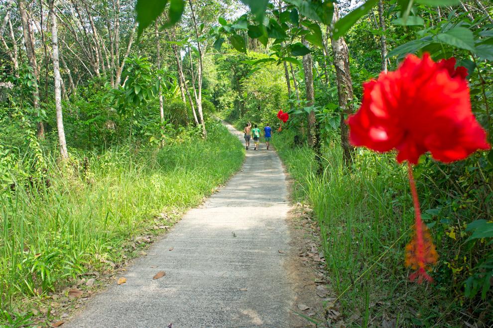 Road in Koh Chang Noi